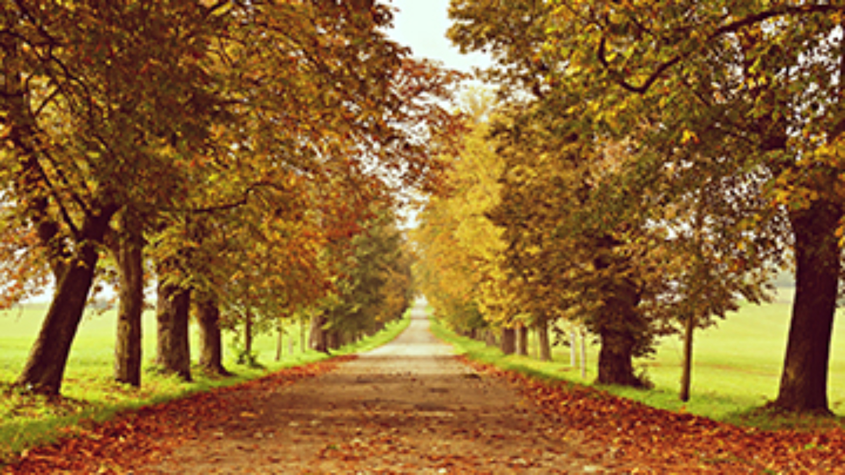 The benefits of buying and selling in the fall