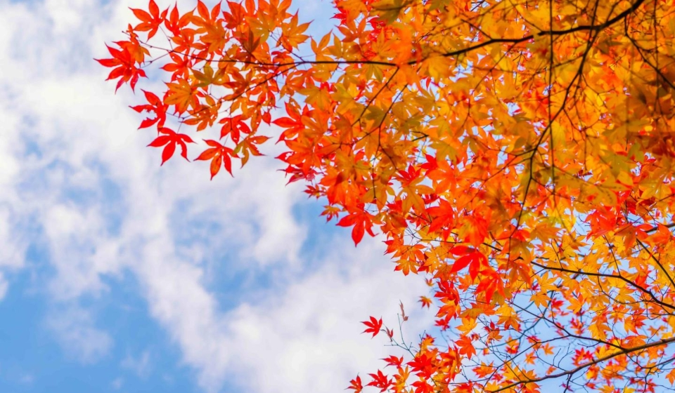 Selling your home this fall